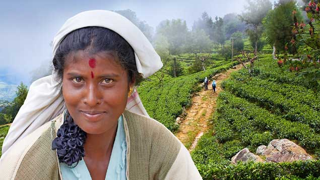 Srí Lanka - ostrov čaje a slonů